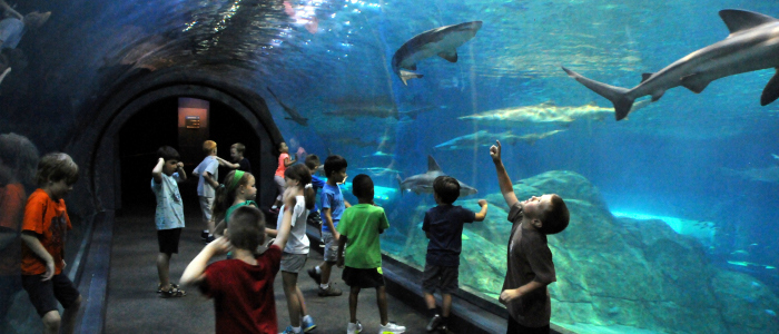 15 Things To Do With Kids In Nj Njmom