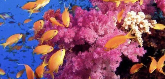 aquariums in NJ, aquariums in New Jersey, best aquariums
