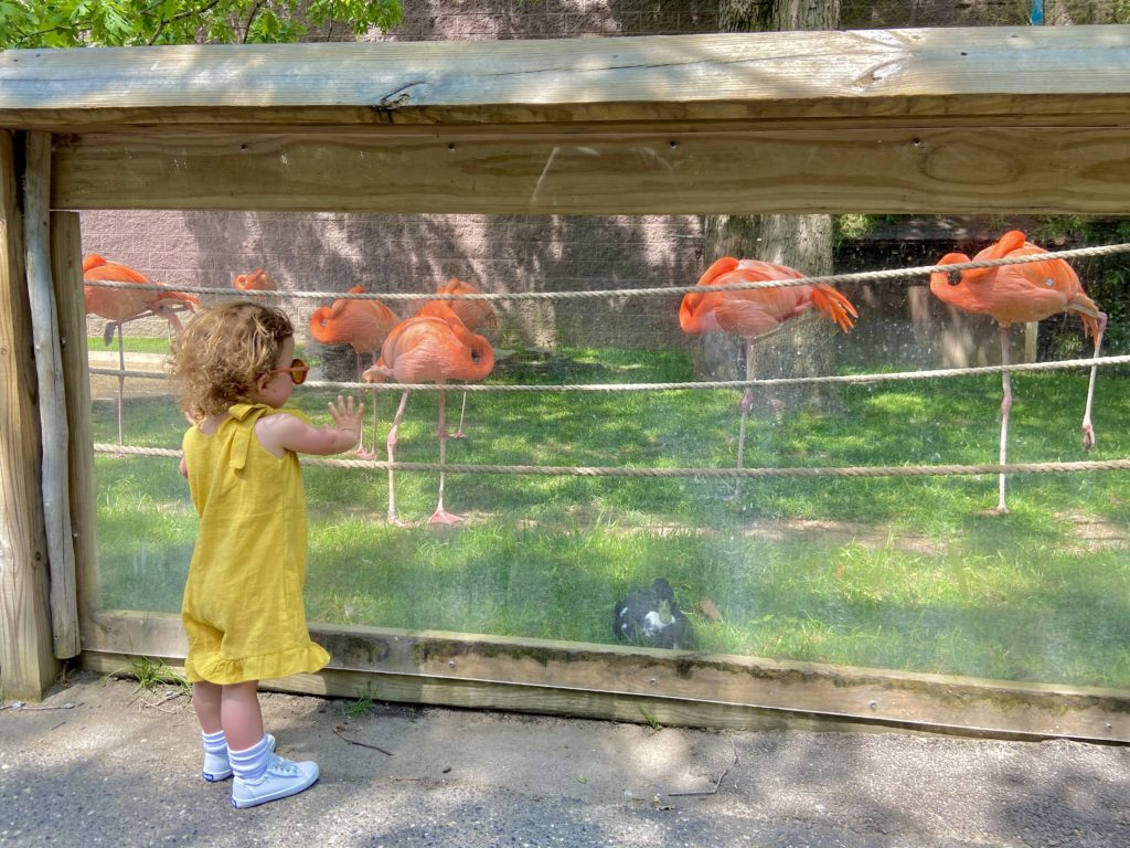nj attractions Cape May Park & Zoo Mew Jersey
