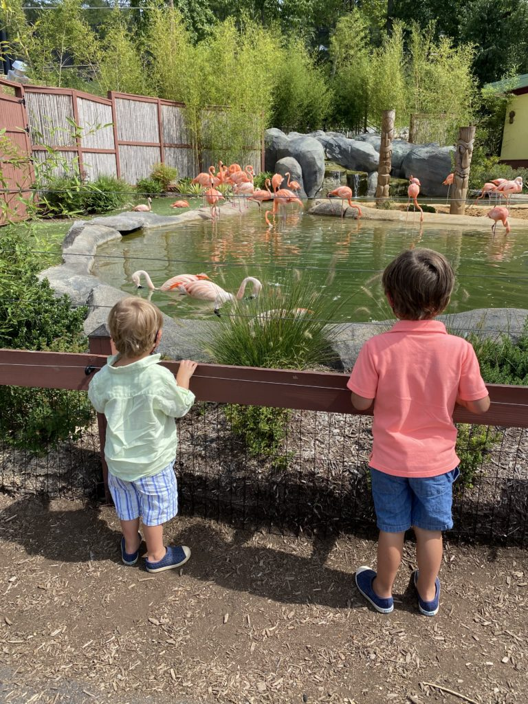 nj attractions Turtle Back Zoo New Jersey